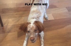 Learn how to play with your dog
